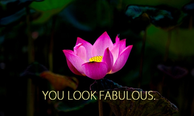 Lotus Blog